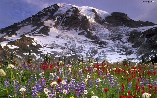 b_lovely-mountain-flowers