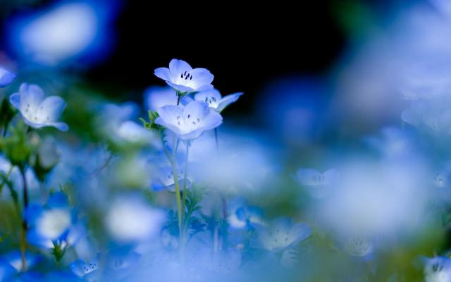blue-flower-beautiful-nature-1920x1200