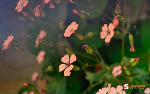 flower-shades-wide